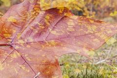 _Tema-otoño-6