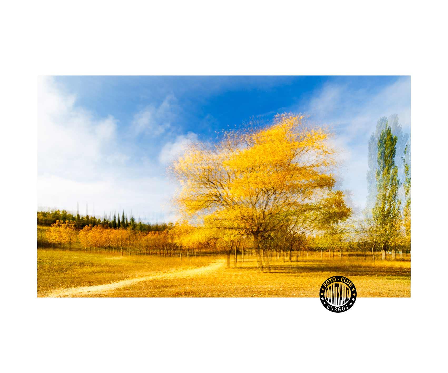 50x60 Otoño en amarillo