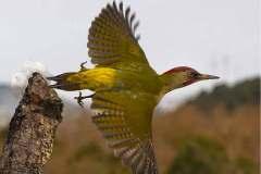 Aves-en-vuelo_bar-la-biblioteca-2